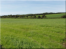 X6499 : Pasture near Corbally by David Hawgood