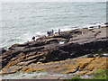 X6899 : Anglers on rocks near Red Head, Dunmore east by David Hawgood
