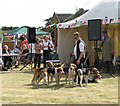 TG3303 : Fair on the Yare - Dunstan Hall Harrier Hounds by Evelyn Simak