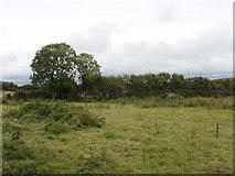 S6406 : Rough grazing near Keiloge by David Hawgood