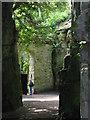 NZ0878 : Belsay Hall - Quarry Garden (2) by Mike Quinn