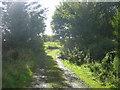 NY6458 : Track at High Midgeholme by Les Hull