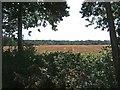SO8066 : Farmland adjacent to Shrawley Wood by P L Chadwick