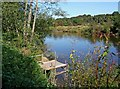 SO8166 : Fishing platform by River Severn by P L Chadwick