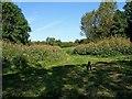 SO8166 : Near Lower Astley Wood by P L Chadwick