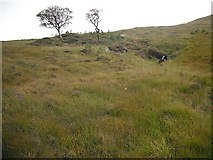 NN3847 : New woodland, Bad na Gualainn by Richard Webb