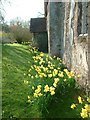 SO6960 : Springtime - St Bartholomew's, Lower Sapey by Frank Cook
