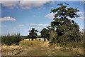 TL8063 : Farm track at Little Saxham by Bob Jones