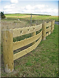 NS4947 : Wooden Fence by wfmillar