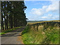 NY7386 : Road to Falstone by Les Hull