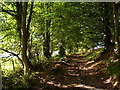 NY4024 : Track through the woodland at the foot of Great Mell Fell by Stephen Middlemiss