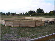 TG0524 : Sheep Pen at Mayfield's off Reepham Road by Adrian Cable