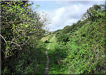 SY9482 : Underhill Path, Knowle Hill by Pierre Terre