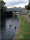 TQ3681 : Geese on the Regent's Canal by ceridwen