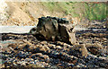 SM8422 : Rocks on the shoreline at Pwll March, Newgale by Andy F