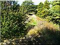 SU1790 : Trackbed, Swindon and Highworth Light Railway, Stanton Park, Swindon (3) by Brian Robert Marshall
