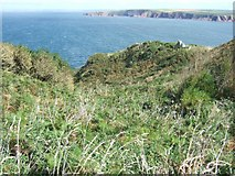 SM7709 : Scrubby valley between the coast path and the sea by David Smith