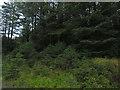 SN7256 : Forestry on Bryn Deilos by Nigel Brown