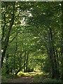 SX5359 : Track along dismantled tramway, Cann Wood by Derek Harper