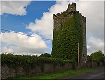 R6147 : Castles of Munster: Williamstown, Limerick (1) by Mike Searle