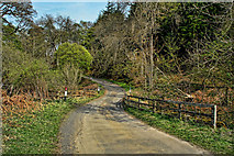 NY9650 : Shildon Burn by Peter McDermott