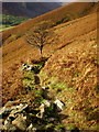 NY3408 : Footpath from Great Rigg to Grasmere by Alexander P Kapp