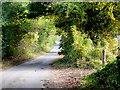 SP0930 : Cotswold lane by Jonathan Billinger