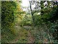SP1029 : Charnal Plantation by Jonathan Billinger
