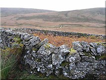 NS7002 : Sheepfold in the Scaur Water Glen by Oliver Dixon