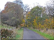 NS8306 : Autumn colours by the Nith by Oliver Dixon