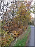 NS8402 : Beech hedge near Breconside by Oliver Dixon