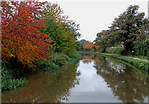 SK0418 : Autumn colours on the canal. Rugeley, Staffordshire by Roger  Kidd
