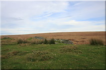 SX5686 : Green Tor by Guy Wareham