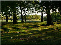 TQ3187 : Finsbury Park through the trees by Peter S