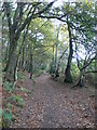 SJ5257 : The Sandstone Trail meandering through the woods near Peckforton Castle by Eirian Evans