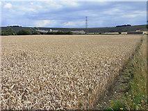 SU1659 : Farmland, Pewsey by Andrew Smith