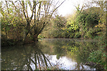 SP3365 : A sharp bend on the River Leam by Robin Stott
