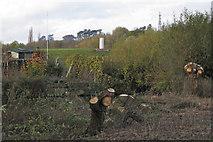 SP3365 : Pollarded willows, Newbold Comyn Park by Robin Stott