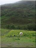 NG9543 : Stalla Dubh by Hugh Venables