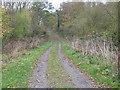 SE8448 : Track through Bratt Wood (Footpath) by JThomas