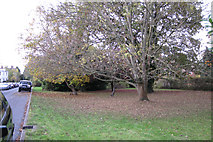 SP3265 : Private open space opposite Willes Terrace by Robin Stott
