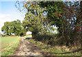 TG2600 : Leafy Oak Lane by Evelyn Simak