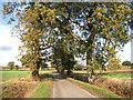 TG2600 : Leavy Oak Lane by Evelyn Simak
