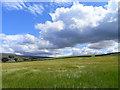 NY6042 : Farmland near Renwick by Andrew Smith