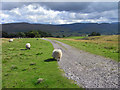 NY3040 : Track and pasture above Caldbeck by Andrew Smith
