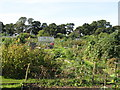NZ2466 : Allotments south of Forsyth Road (2) by Mike Quinn