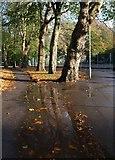 SX9164 : Puddle in Upton Park by Derek Harper