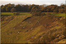 TQ2452 : Shrub clearance, Colley Hill by Ian Capper