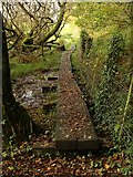 SX5856 : Duckboards at Hemerdon Siding by Derek Harper