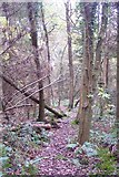 TQ4660 : Footpath in Hayman's Wood by David Anstiss